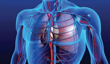 Beneficios-Circulación-Sanguinea-Omega3